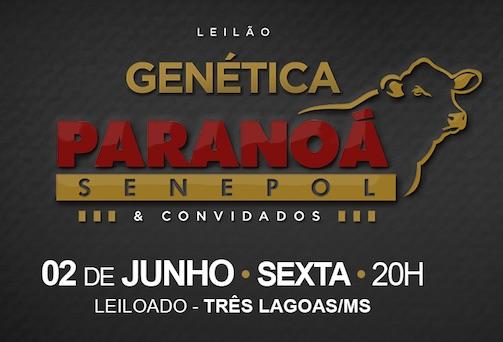 Leilão Genética Paranoá comercializa as melhores doadoras Senepol do presente e do futuro