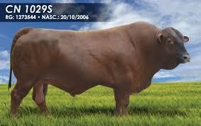 CN1029S