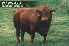 WIZARD23D