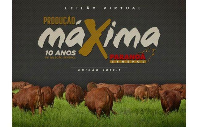 LeilaoProducaoMaxima2019